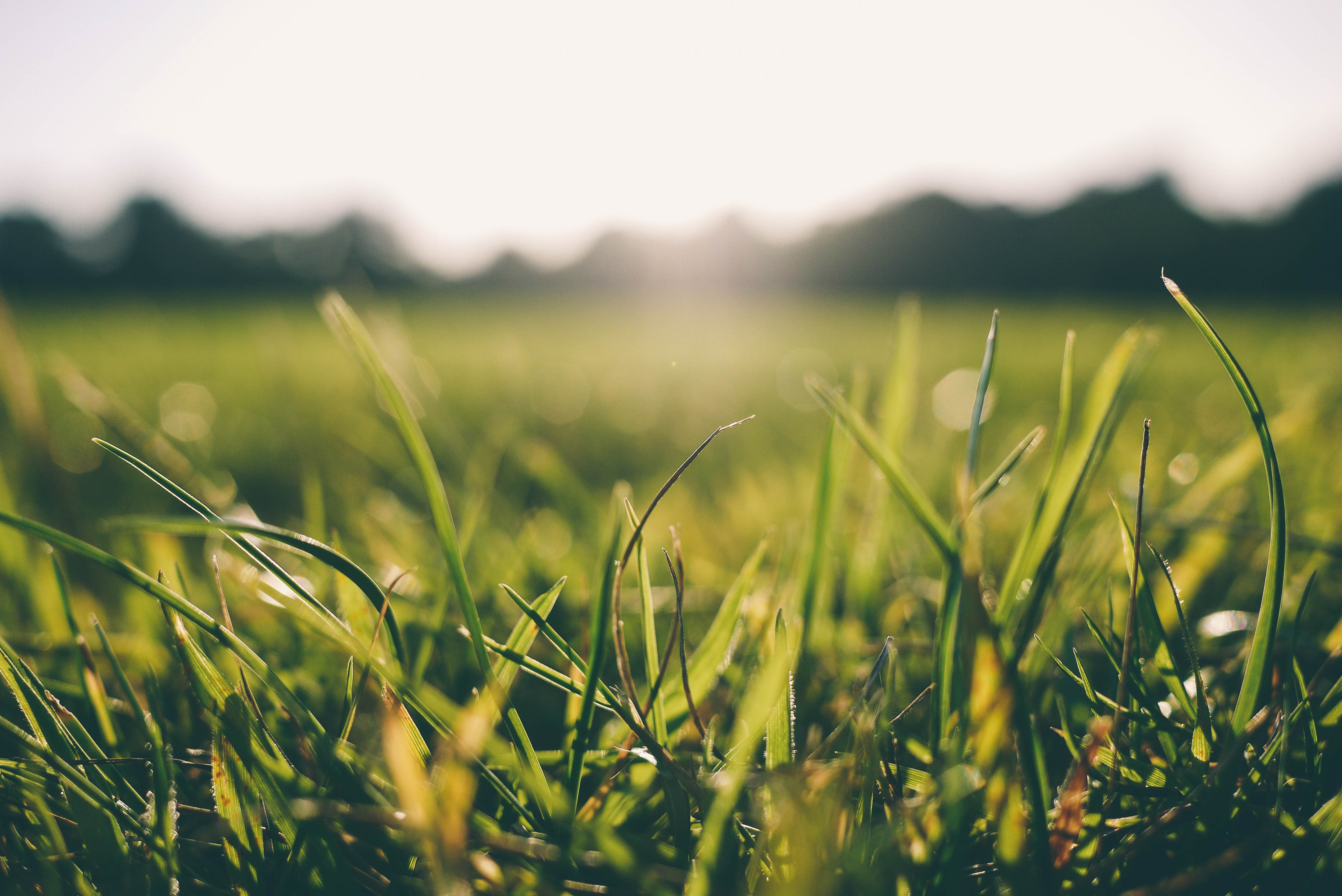 4 perspectives interconfessionnelles pour nous aider à comprendre la grâce