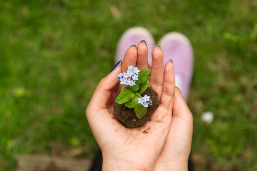 L'envie et l'orgueil sont comme des mauvaises herbes qui empêchent les bonnes semences qui apportent le bonheur de pousser