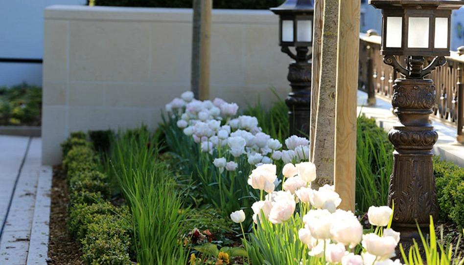 les fleurs du jardin du temple de Paris