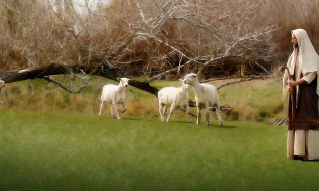 Le service pastoral : le nouveau programme de visites