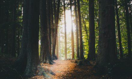 Jésus-Christ est le chemin à suivre