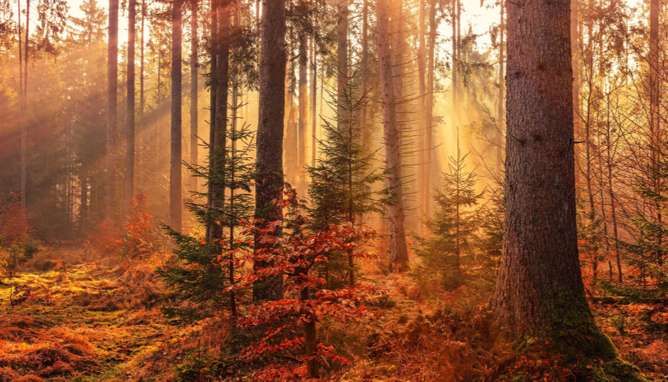intendance et protection environnementale: préservons les forêts