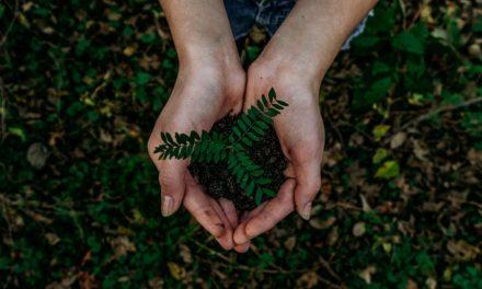 Soyons de bons intendants et respectons les créations de Dieu (2e partie)