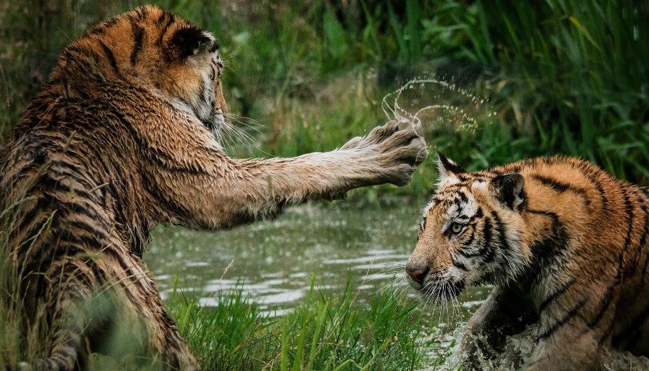 Vivre avec l'animal le plus mortel… et le combattre