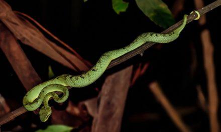 """""""Et quiconque regardait le serpent d'airain conservait la vie"""""""