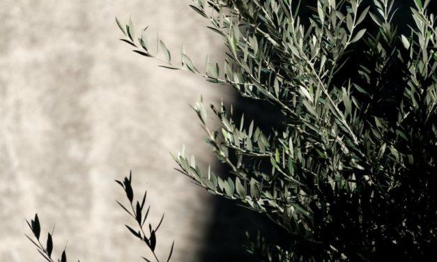 Comment le Christ nous enseigne à faire confiance au Père