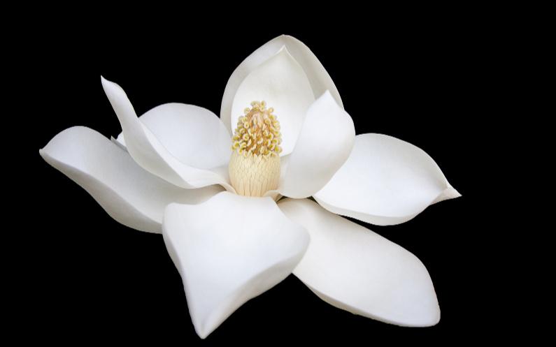 la pureté représente la vraie beauté